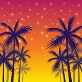 Affiche met de schaduwen van palmen van geel-rode zonsondergangachtergrond Royalty-vrije Stock Afbeelding