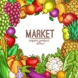 Affiche naturelle de croquis de légumes et de fruits de vecteur Photo libre de droits