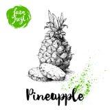 Affiche tirée par la main d'ananas de croquis Dirigez l'ananas avec l'illustration ronde de nourriture d'eco de tranches Photos libres de droits