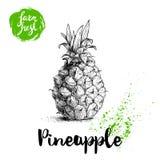 Affiche tirée par la main d'ananas de croquis Illustration de nourriture d'eco d'ananas de vecteur Insigne frais de ferme tirée p Photos libres de droits