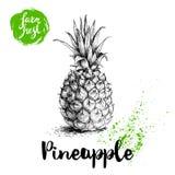 Affiche tirée par la main d'ananas de style de croquis Illustration de nourriture d'eco d'ananas de vecteur Images stock