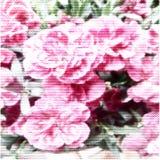 Affiche van bloemen Halftone gekleurde textuur Stock Foto