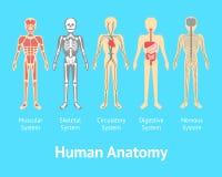 Affiche van de het Systeemkaart van de beeldverhaalkleur de Menselijke Anatomische Vector royalty-vrije illustratie