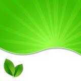 Affiche van Eco de Groene Bladeren Royalty-vrije Stock Foto's