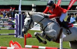 Affichez le cheval et le curseur branchants Photo libre de droits