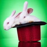 Affichez les lapins Photographie stock libre de droits