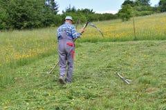 Affilage de la manière traditinoal de faux du fauchage d'herbe Image stock
