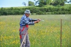 Affilage de la manière traditinoal de faux du fauchage d'herbe Photo libre de droits
