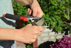 Affili i tagli della potatura per il taglio perfetto La pulizia ed affila fotografia stock libera da diritti