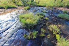 Affinis de Vriese Spathoglottis και λιβάδια στους λόφους ασβεστόλιθων στο γιο Thung μη Στοκ Φωτογραφίες