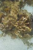 Affioramento della barriera corallina Immagini Stock Libere da Diritti