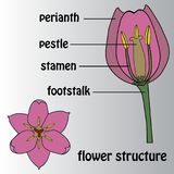 Affisch på temat av blommastrukturen bostonian vektor illustrationer