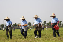 Afforest. Workers are seeding in the field Stock Images