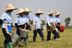 Afforest. Workers are seeding in the field Royalty Free Stock Image
