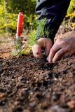 Afforest. Men planting a tree for afforest Stock Photo