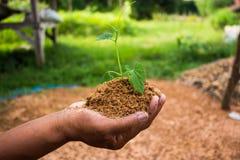 Afforest back to nature. Afforest back to nature, concept nature Stock Photo