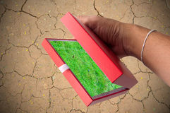 Afforest by box in hand. Afforest by red box in hand Stock Photo