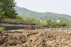 afforest in Shitang village Royalty Free Stock Image