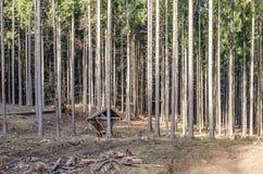 Affouragement animal jeté dans la forêt Images libres de droits