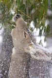 Affouragement hivernal Image libre de droits