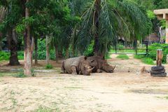 Affrican rhino Royalty Free Stock Images