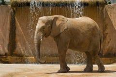 Affrican słoń Obraz Royalty Free