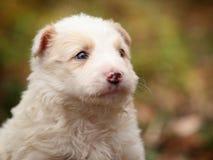 Affronti un piccolo cucciolo bianco in all'aperto fotografia stock