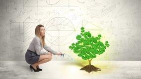 Affärskvinna som bevattnar ett växande grönt träd för dollartecken Arkivfoto