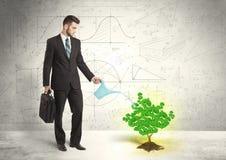 Affärsman som bevattnar ett växande grönt träd för dollartecken Royaltyfria Bilder