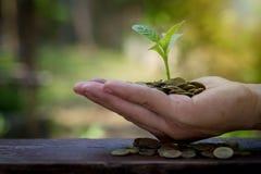 Affärsmaninnehavväxt som spirar från guld- mynt för en handfull Arkivbilder