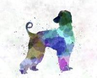 Afgan Hound 01 in watercolor Stock Image