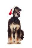 Afgan-persiga el perro con el sombrero de Santa fotografía de archivo libre de regalías