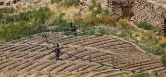 Afganistan wieśniacy pracuje ich fabułę landctll szkoła zdjęcie stock