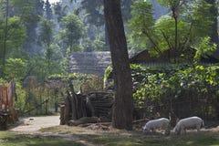 Afgelegen gebied in Terai - Nepal Stock Afbeelding