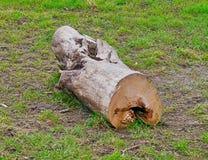 Afgesponst segment van een boomboomstam op een weide stock fotografie