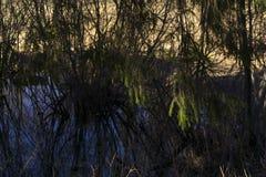 Afgezonderd oxbow meer in de vallei van de de lenterivier Stock Foto