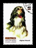Afghan Hound (Canis lupus familiaris), Dogs serie, circa 2003. MOSCOW, RUSSIA - DECEMBER 21, 2017: A stamp printed in Afghanistan shows Afghan Hound (Canis lupus royalty free stock photo