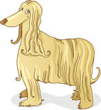 Afghan hound dog. Illustration of funny dog of afghan hound breed Stock Images