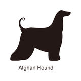 Afghan Hound dog silhouette, side view, vector Stock Photo