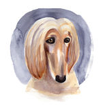 Afghan hound drawn by watercolor. Royalty Free Stock Photography