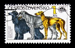 Afghan Hound, Irish Wolfhound, Greyhound (Canis lupus familiaris. MOSCOW, RUSSIA - NOVEMBER 26, 2017: A stamp printed in Czechoslovakia shows Afghan Hound stock photos
