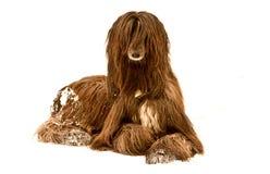afghan hund Royaltyfria Foton