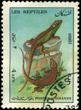 Afghan Stamp 1986. Afghan stamp from 1986 depicting a lizard Stock Photos