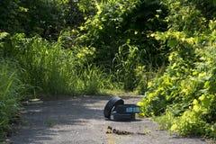 Afiação do gramado em um trajeto da bicicleta imagem de stock royalty free