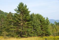 Afie onde o prado encontra a floresta foto de stock