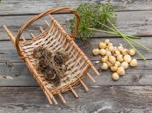 Aflatunense do Allium dos bulbos em uma cesta em um fundo de madeira Foto de Stock Royalty Free