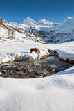 Aflinger horse goes drinking in a frosted creek of an alpine val Royalty Free Stock Images