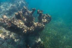 Afloramiento del arrecife de coral Imágenes de archivo libres de regalías