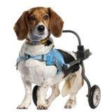 Afloramiento perjudicado paralizado Artésien Normand Fotografía de archivo libre de regalías