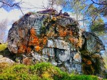 afloramiento Piedra enorme en bosque septentrional donde hay árboles Fotos de archivo